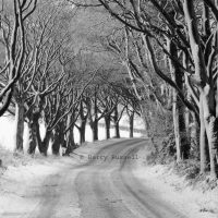 The Beeches, Twynholm after the snow